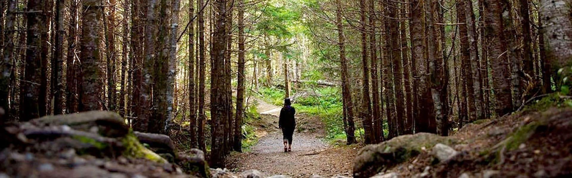 A woman walks down a trail in a dense forest
