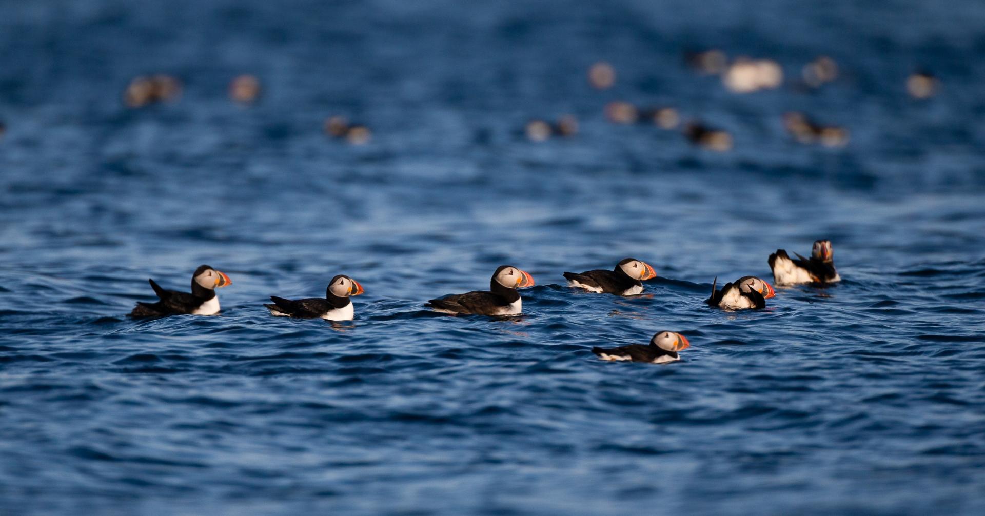 Birding in Cape Breton 1