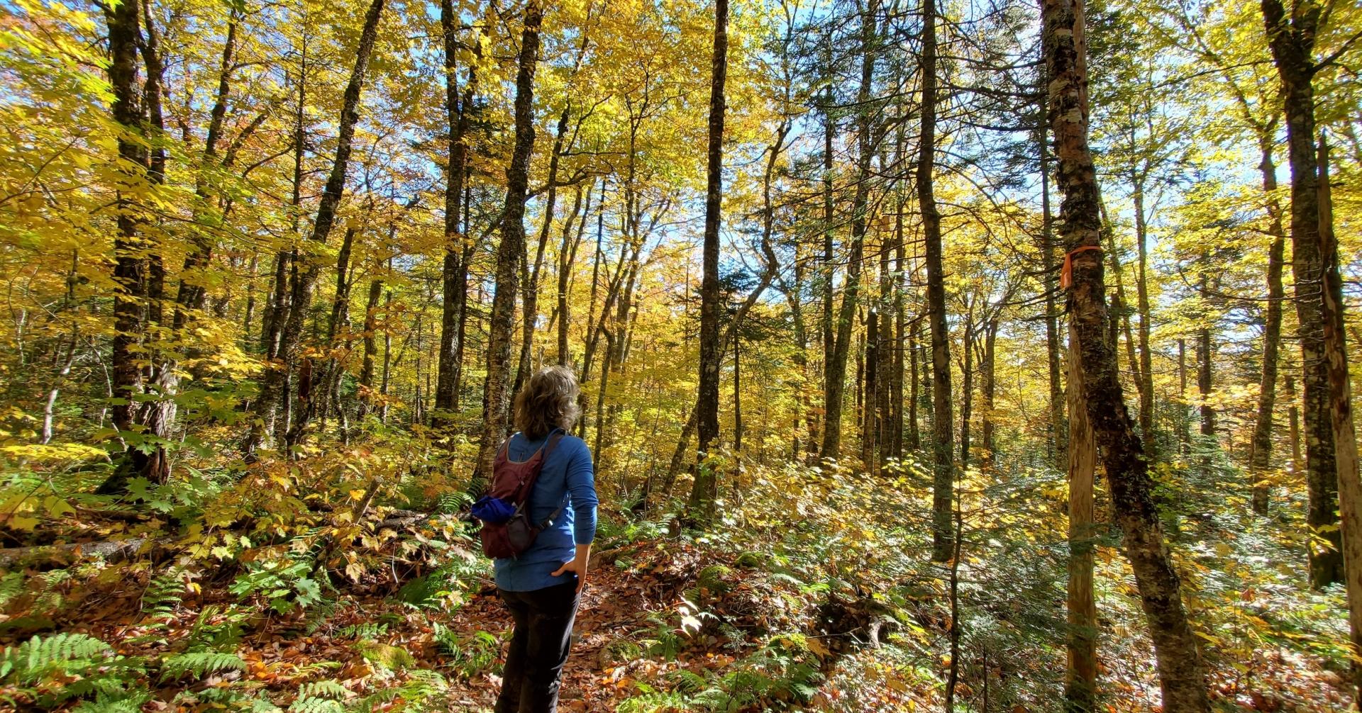 Explore the Bras d'Or - A Fall Gem 6