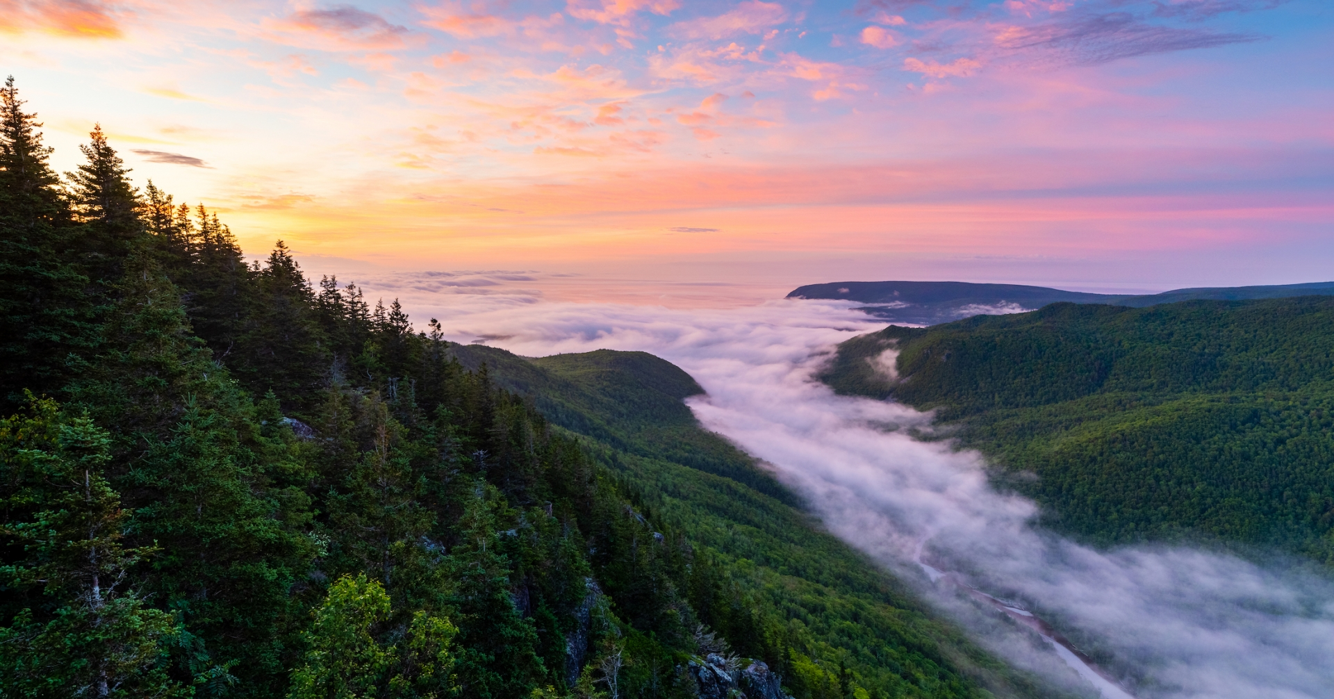 low fog rolls into wooded valley from the ocean